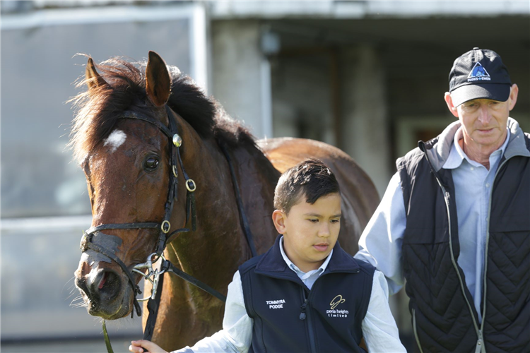 Ten-year-old strapper Nethan Hunter with nine-year-old Fairview Motors Waikato Hurdle (3200m) Winner Tommyra