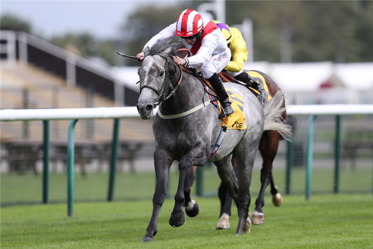 TOP RANK winning the Superior Mile Stakes at Haydock Park in England.