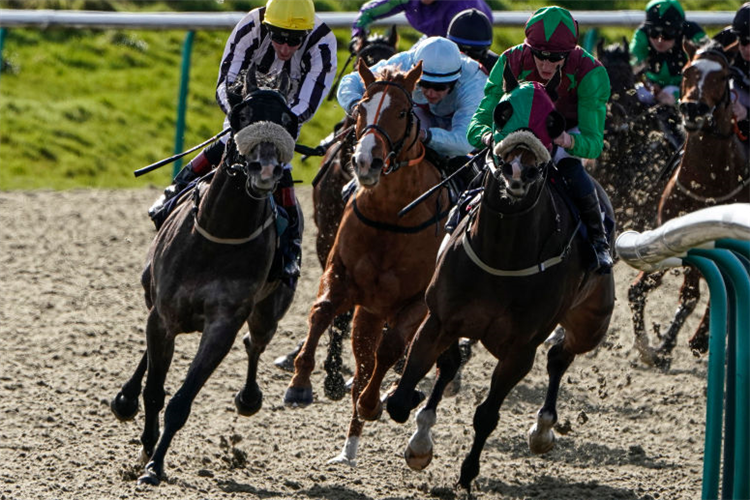 UNDER CURFEW  winning the Heed Your Hunch At Betway Handicap at Lingfield Park in Lingfield, England.