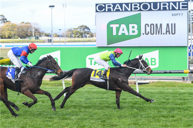 WERTHEIMER winning the TAB Long May We Play Maiden Plate in Cranbourne, Australia.
