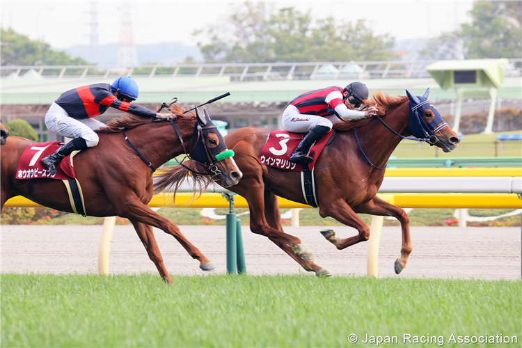 WIN MARILYN winning the Flora Stakes at Tokyo in Japan.