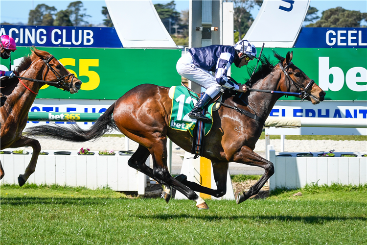 YOUNG WERTHER winning the Bet365 Top Tote Plus Mdn Plate at Geelong in Australia.
