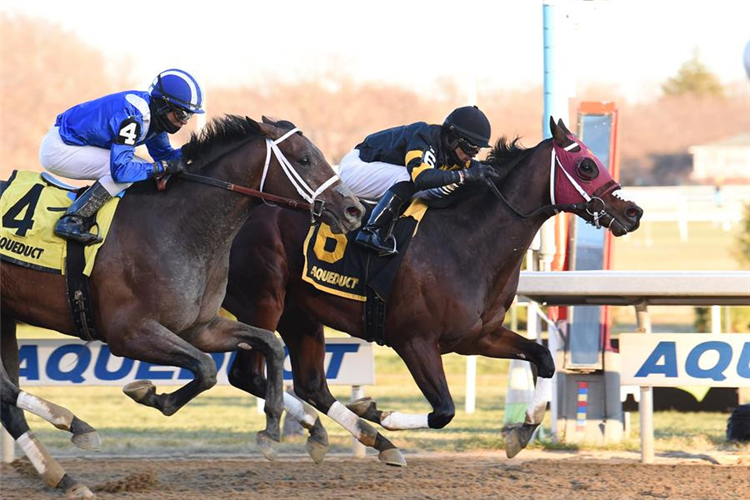 Ajaaweed(blue cap) chases home Shotski in the G2 Remsen