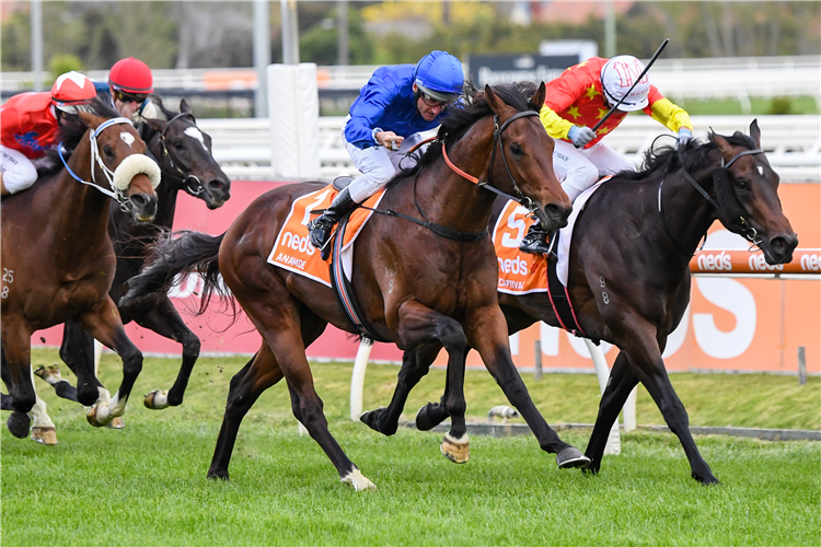 ANAMOE (blue cap) winning the Caulfield Guineas at Caulfield in Australia.