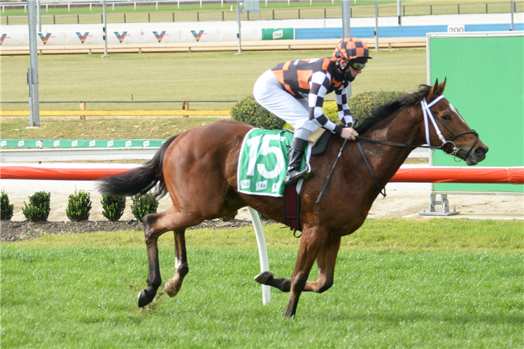 BLAZERRO winning the Hertz Cranbourne Maiden Plate in Cranbourne, Australia.