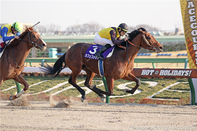 CAFE PHAROAH winning the February Stakes at Tokyo in Japan.