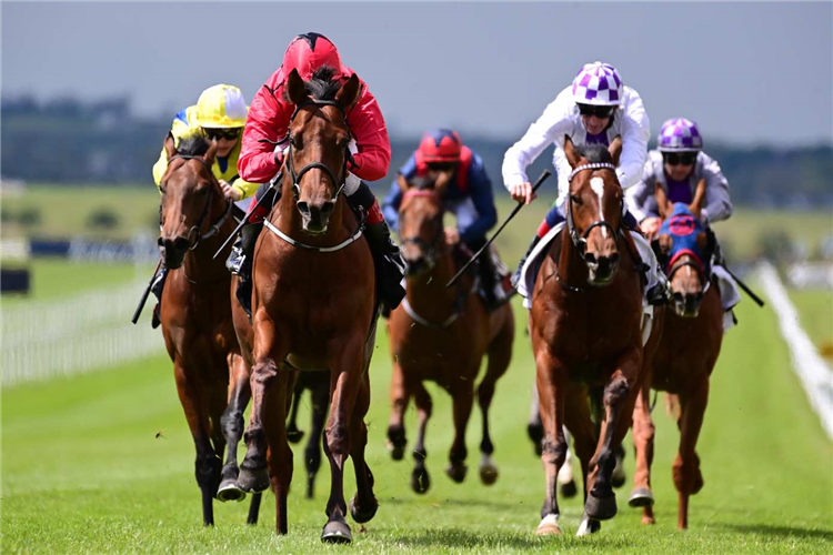 CASTLE STAR winning the GAIN Marble Hill Stakes (Group 3)