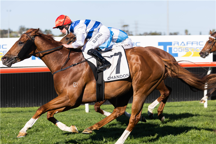 CHAT winning the Chandon Theo Marks Stakes at Kembla Grange in Australia.