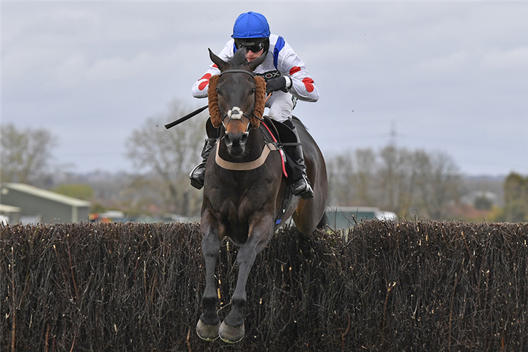 CLAN DES OBEAUX winning the Betway Bowl Chase (Grade 1) (GBB Race)