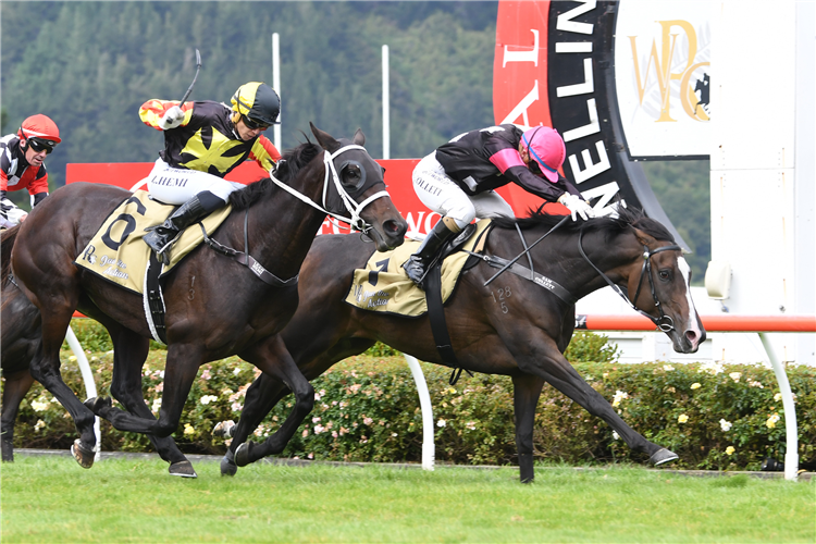 COVENTINA BAY winning the Wentwood Grange Cuddle Stakes