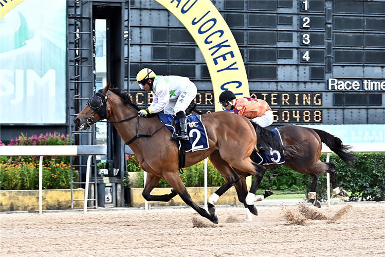 CROWN OF GOLD winning the THE AMAH ROCK