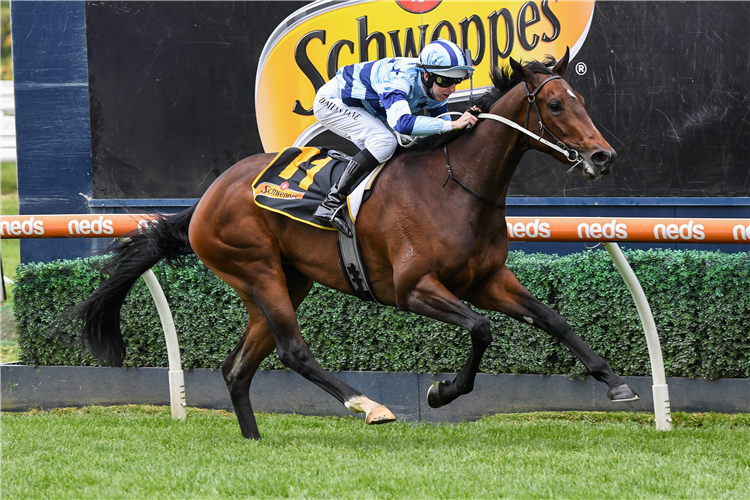 DAISIES winning the Ethereal Stakes at Caulfield in Australia.