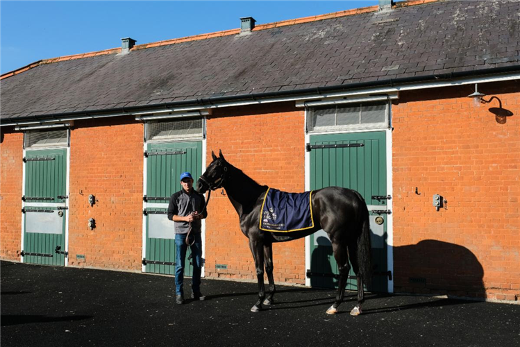 Extravagant Kid at Abington Place Stables