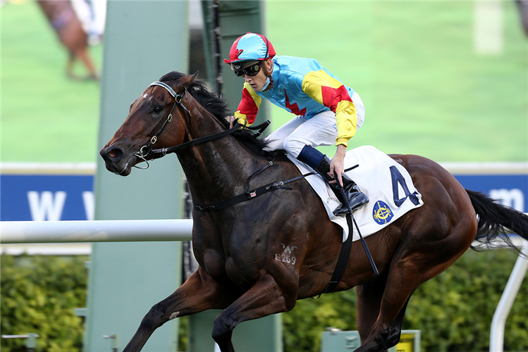 Fantastic Treasure is named the season's Champion Griffin.