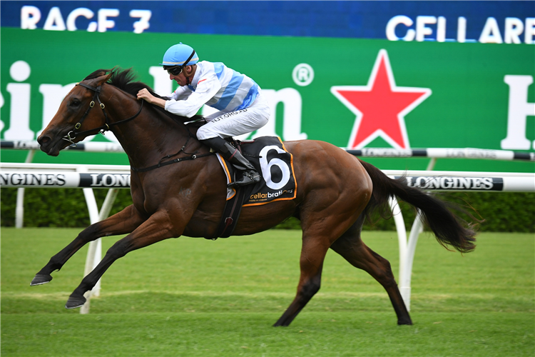 FORBIDDEN LOVE winning the Surround Stakes at Randwick in Australia.