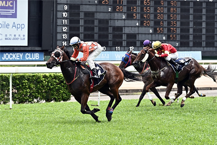 GLOBAL JUSTICE winning the THE SHAUKEIWAN (DIV.2)