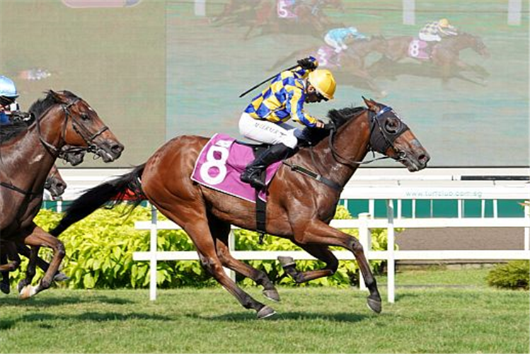 HARD TOO THINK winning the SINGAPORE DERBY GROUP 1