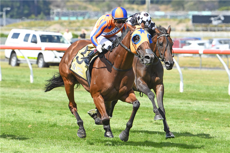 MELODY BELLE winning the Harcourts Thorndon Mile