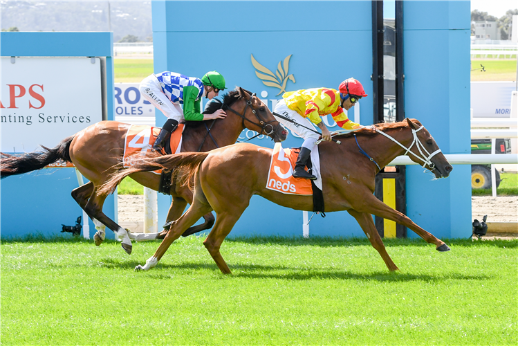 MOHICAN HEIGHTS winning the Asset Painting Services Hcp at Mornington in Australia.