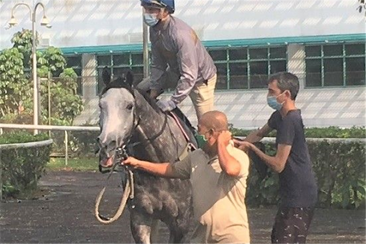 Assistant-trainer Michael White is on hand to give Louis-Philippe Beuzelin a leg-up aboard Moon Face.