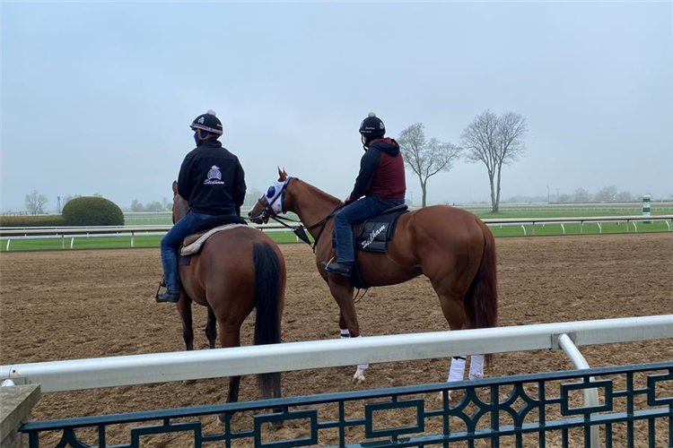 Mystic Guide training at Keeneland