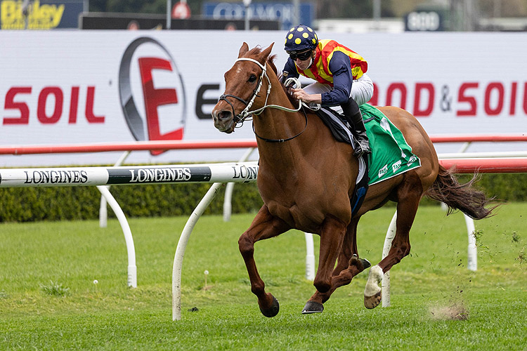NATURE STRIP winning the Tab Concorde Stakes