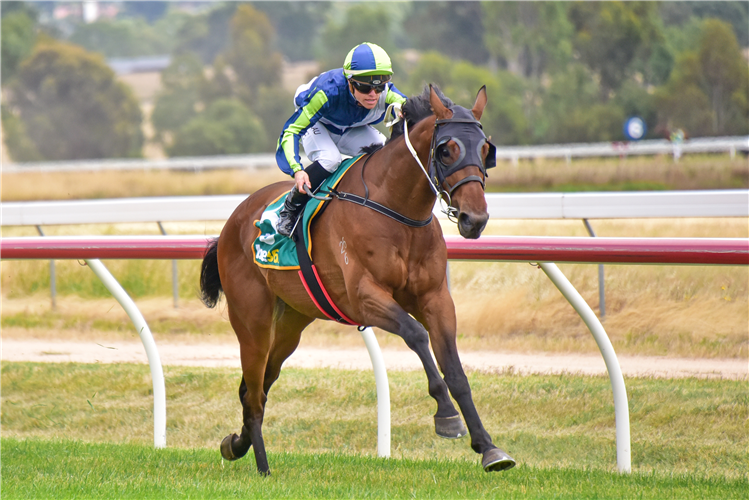 OUT AND DREAMING winning the Ararat Farm Supplies SV Maiden Plate  in Ararat, Australia.
