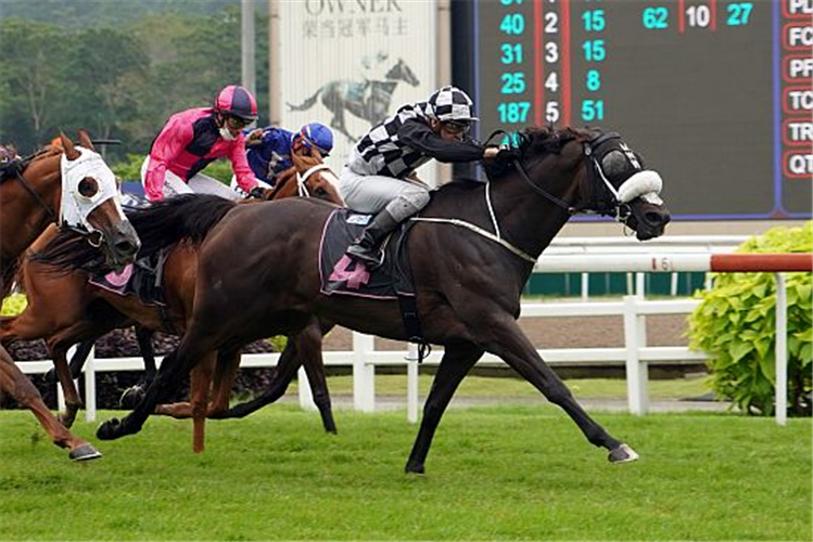 SACRED CROIX winning the SUPER EASY 2013 STAKES CLASS 1