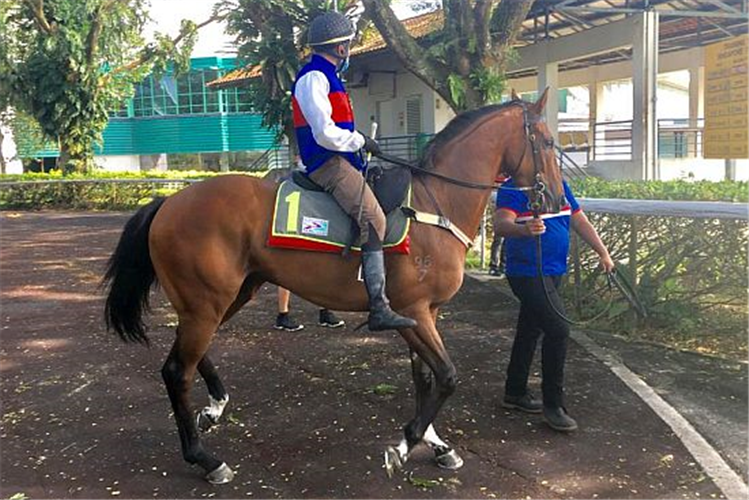 Jockey : MARC LERNER on the way to his barrier trial in Kranji.