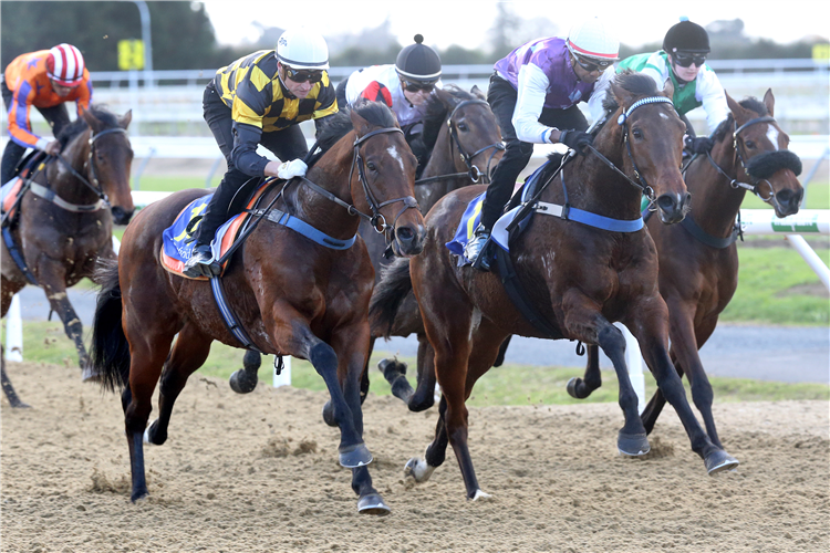 Sword Of State (outside) finishing runner-up in his trial at Cambridge on Tuesday.