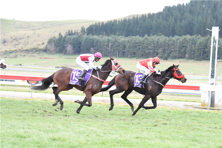 TAPPY'S ONE winning the Crombie & Price Ltd Oamaru Cup