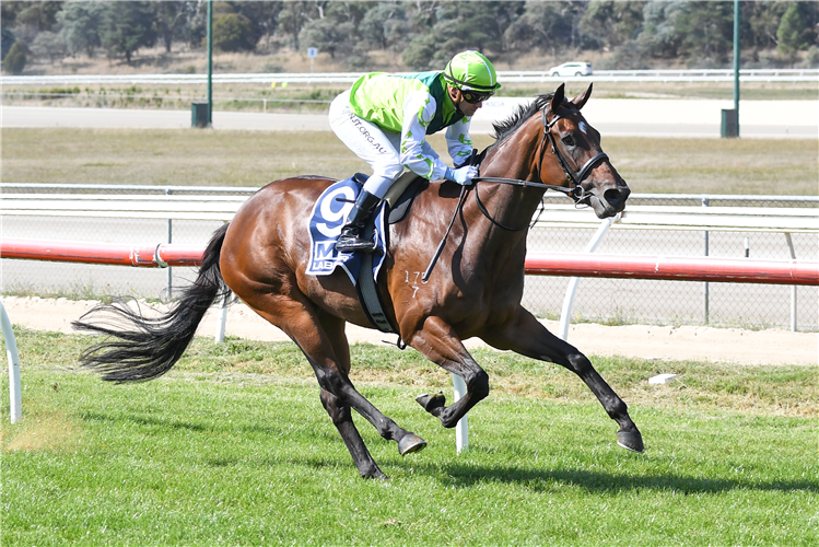 TRANSPLANT  winning the MC Labour Fillies and Mares Maiden Plate in Kilmore, Australia.