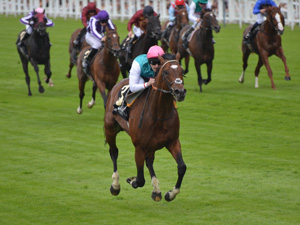 Frankel Excitement Building In Australia