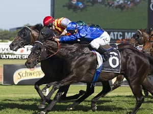 Today's Rosehill Preview