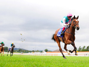 Enable Has King George Option