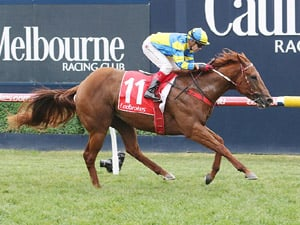 Native Soldier winning the H.D.F. McNeil Stakes