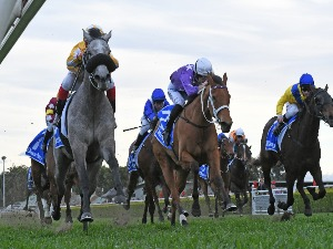 PURE ELATION winning the DARLEY FURIOUS STAKES.