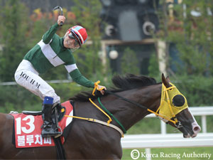 Korea Sprint Winner Blue Chipper Is Breeders Cup Bound