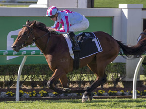 Dubious winning the Moet&Chandon Champagne Classic