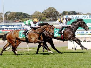 「海港风光」夺冠吉朗奥斯特麦克乡村基准78赛(Geelong Aust. McC Country-Bm78)