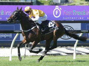 Qiji Express winning the Mufhasa Fasttrack Stakes