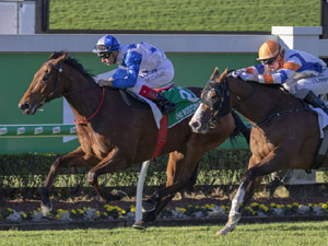 The Bostonian Wins Kingsford Smith Cup