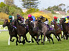 Farm Boy(the gray) wide at turn,winning the Avondale Cup
