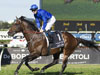 Astern wins the Golden Rose