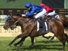 Impending winning the Stan Fox Stakes