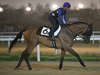 Karis Teetan partners Korea Sprint runner Super Jockey on the main track at Seoul Racecourse this morning.