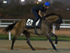 Super Jockey canters this morning with Beverly Millard on board in preparation for the Korea Sprint.