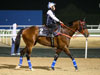 Amazing Kids appears to be in good condition as he prepares for the G1 Al Quoz Sprint this Saturday.