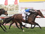 Brave Smash wins at Moonee Valley