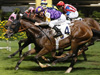 Litterateur winning the TROPICBIRD HANDICAP